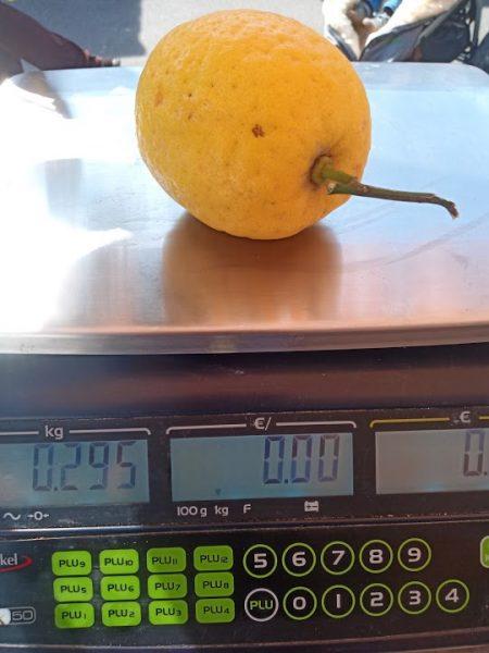 Bild: Zitrone mit 295 g
